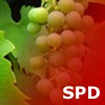 SPD Ortsverein Radebeul